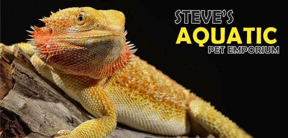 Pet Dragons at Aquatic Scarborough - Steve's Aquatic Pet Emporium